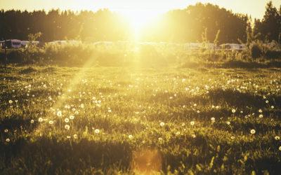 Cinque modi per creare un giardino in casa